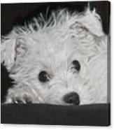 Resting Puppy Canvas Print