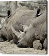 Resting Rhinos Canvas Print