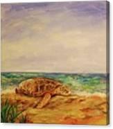 Resting Sea Turtle Canvas Print