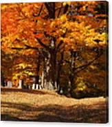 Resting Under Maples Canvas Print