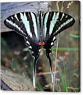Resting Zebra Swallowtail Butterfly Square Canvas Print