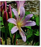 Resurrection Flower Canvas Print