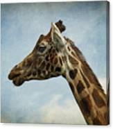 Reticulated Giraffe Head Canvas Print