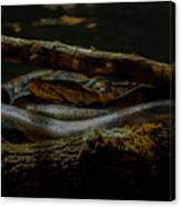 Reticulated Python Canvas Print