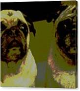 Retro Pugs Canvas Print