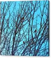 Returning Robins Canvas Print