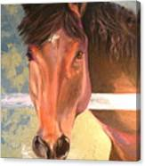 Reverie - Quarter Horse Canvas Print
