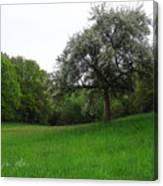 Rhineland-palatinate Summer Meadow Canvas Print