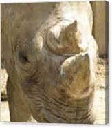 Rhino Closeup Canvas Print