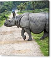 Rhino Crossing Canvas Print