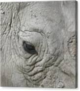Rhino Eye Canvas Print