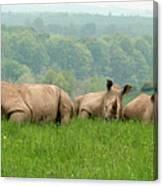 Rhino Heard Panarama Canvas Print