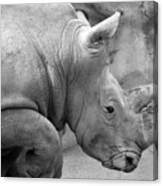 Rhino Profile Canvas Print
