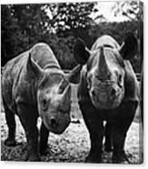 Rhinoceroses Canvas Print