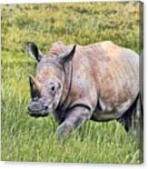 Rhinosceros Canvas Print