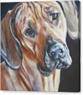 Rhodesain Ridgeback Canvas Print