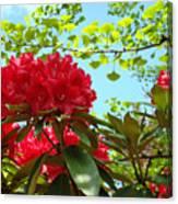 Rhodies Art Prints Red Rhododendron Floral Garden Landscape Baslee Canvas Print