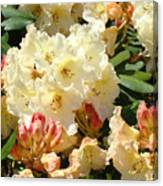 Rhodies Creamy Yellow Orange 3 Rhododendrums Gardens Art Baslee Troutman Canvas Print