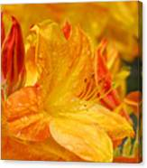Rhodies Orange Yellow Rhododendrons Art Prints Canvas Baslee Troutman Canvas Print