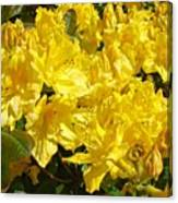Rhodies Yellow Rhododendrons Art Prints Baslee Troutman Canvas Print