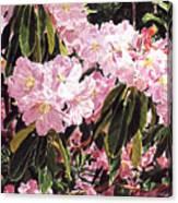 Rhodo Grove Canvas Print