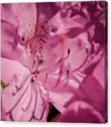 Rhododendron-close Up Canvas Print