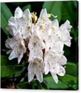 Rhododendron Family Of Flowers Canvas Print