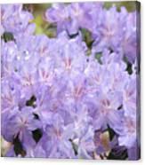 Rhododendron Floral Flowers Lavender Purple Prints Baslee Canvas Print