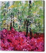 Rhododendron Glade Norfolk Botanical Garden 201821 Canvas Print