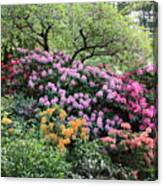 Rhododendron Hill Canvas Print