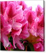 Rhododendron I Canvas Print
