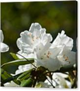 Rhododendron II Canvas Print