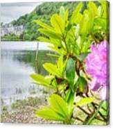 Rhododendron On Lake Kylemore, Kylemore Abbey Galway Canvas Print