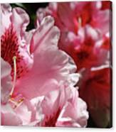 Rhododendrons Art Prints Floral Pink Rhodies Canvas Baslee Troutman Canvas Print