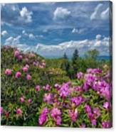 Rhododendrons Canvas Print