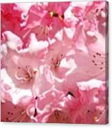 Rhododendrons Flowers Art Print Pink Rhodies Baslee Troutman Canvas Print