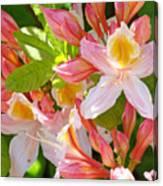 Rhododendrons Garden Floral Art Print Pink Rhodies Canvas Print