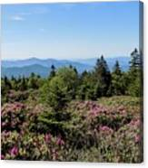 Rhododendron On Roan Mountain Canvas Print