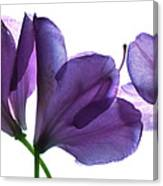 Rhody Ballet-purple Canvas Print