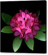 Rhody Queen - Red Canvas Print