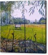 Rice Fields At Bumi Agung Lampung Sumatra Indonesia 2008  Canvas Print