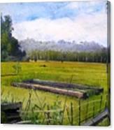 Rice Fields At Laaiy Krui Lampung Sumatra Indonesia 2008  Canvas Print