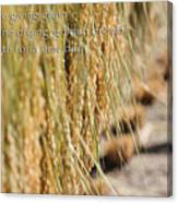 Rice Harvest - Haiku Canvas Print