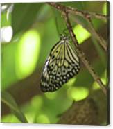Rice Paper Butterfly Clinging To A Tree Branch Canvas Print