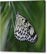 Rice Paper Butterfly Sitting On Green Foliage Canvas Print
