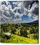 Rice Terrace Canvas Print