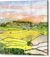 Ricefield Terrace Canvas Print