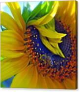 Rich In Pollen Canvas Print
