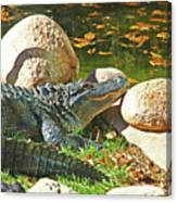 Richly Hued Colorado Gator On The Rocks 2 10282017 Canvas Print