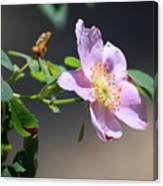 Rimrock Rose Canvas Print